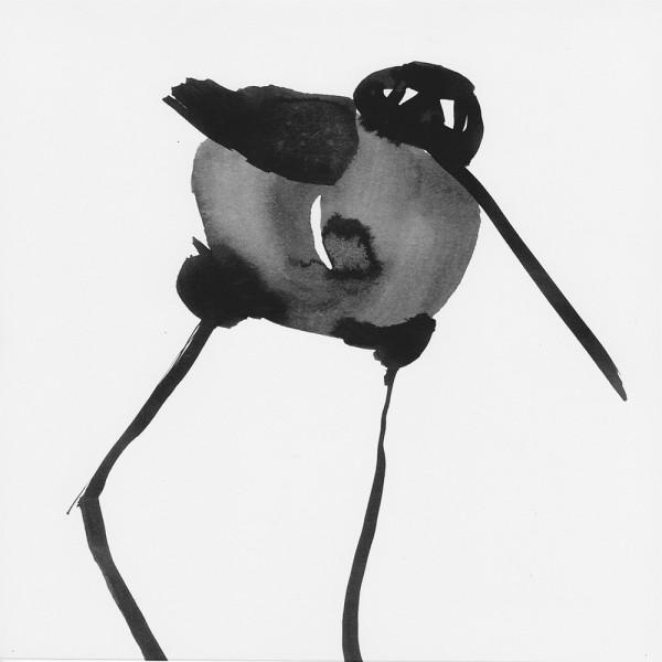 Tuschevogel Grauer Stapfer